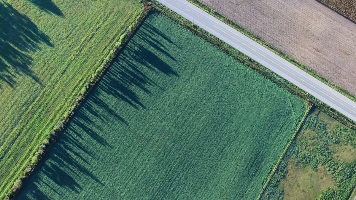 Najczęstsze schorzenia w rolnictwie
