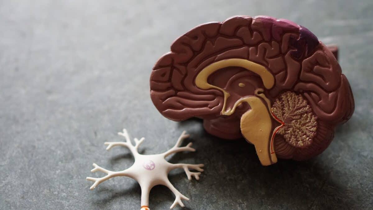 Jak koronawirus wpływa na mózg?